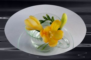 Yellow freesia buds