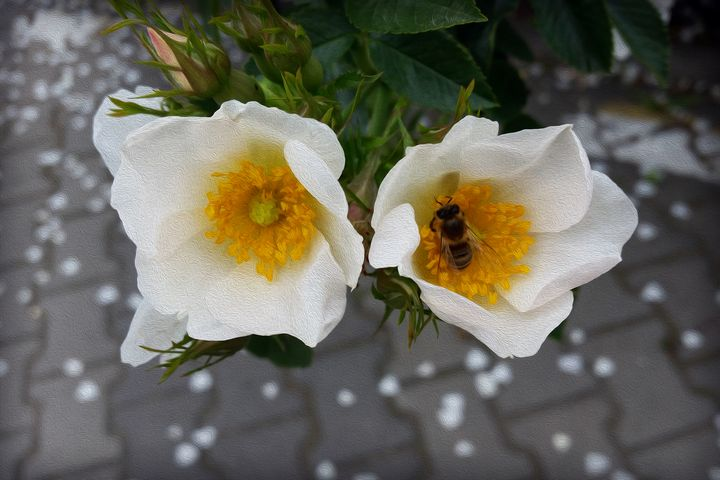 Bee and flowers in spring - feiermar