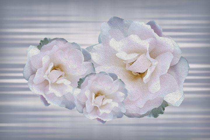 Pink gray roses - feiermar