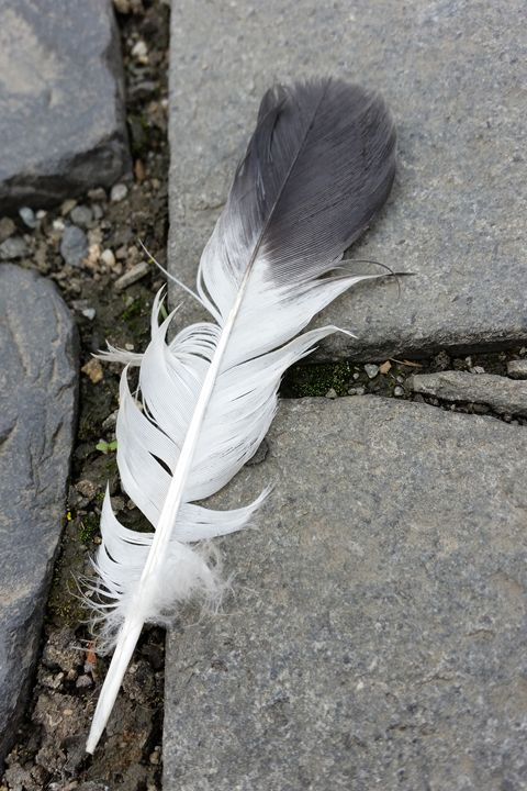 feather on pavement - feiermar