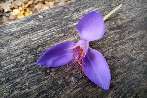 Purple flower on a bench