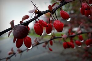 Rain on twig