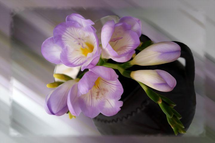 Light purple freesias - feiermar