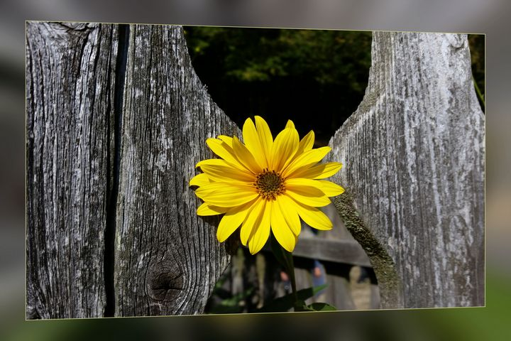 Welcoming yellow flower - feiermar