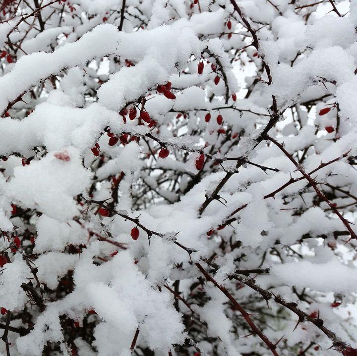 first snow - feiermar