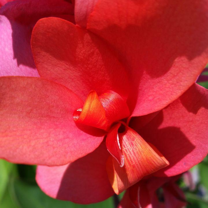 bright red petals - feiermar