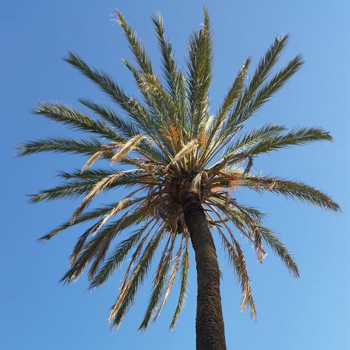 crown of a palm tree - feiermar