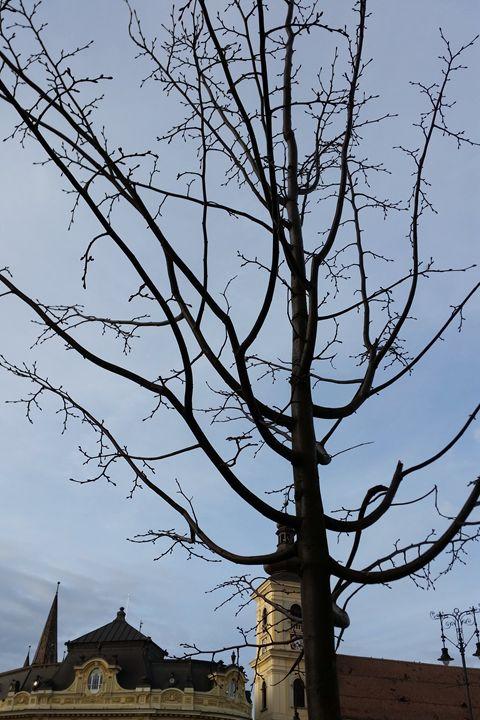 a budding tree - feiermar