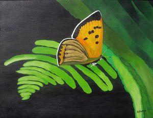 butterfly on a fern