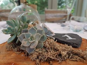 Succulent memories - Natural necessities