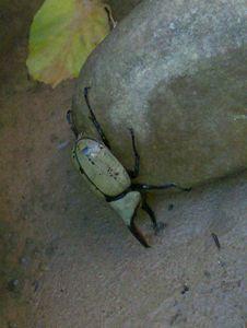 Zion Bug