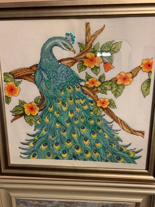 Peacock - Bronya Vaserman