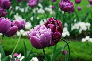 Flowers' Love