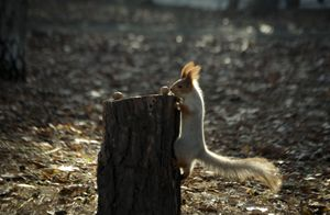 Squirrel feeding 1