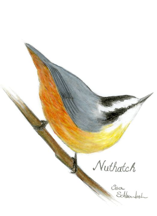 Nuthatch - Sara Jeanette Schlumbohm