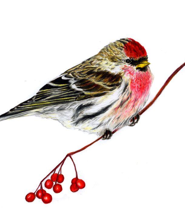 Redpoll with Berries - Sara Jeanette Schlumbohm
