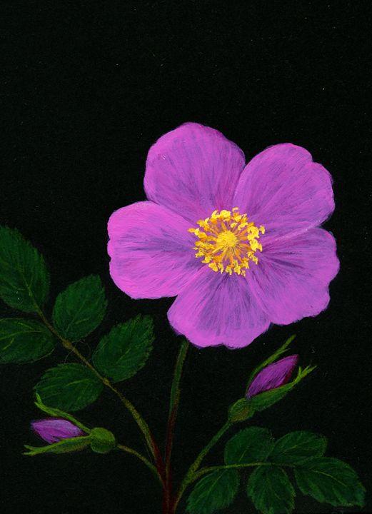 Wild Rose - Sara Jeanette Schlumbohm