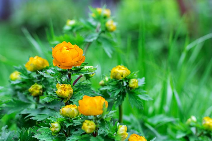 Orange flower in the summer garden - Igor Koshliaev