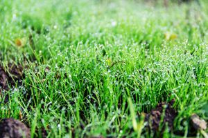 morning dew drops on the grass - Igor Koshliaev