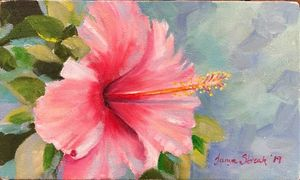 Pink Bougainvillea 1
