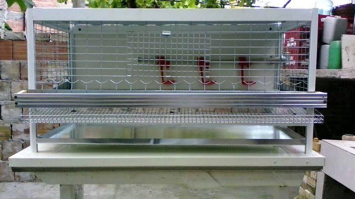 Aluminum cage for quail - catrin