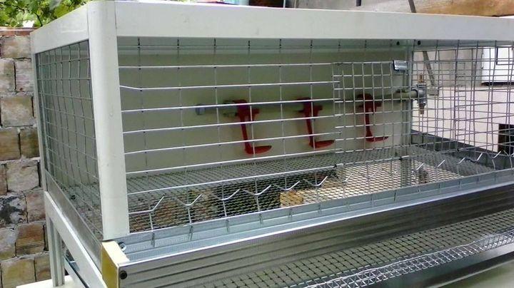 Aluminum cage for quail. - catrin