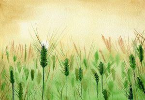 Barley...