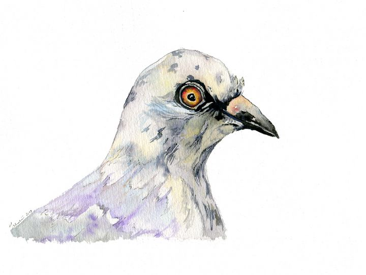 Pigeon - Art Aroma by Mehak Mittal