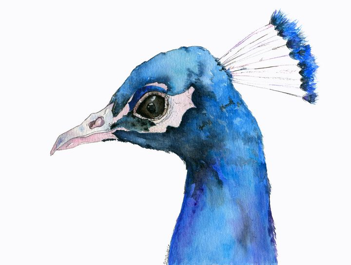 Mr. Peacock - Art Aroma by Mehak Mittal
