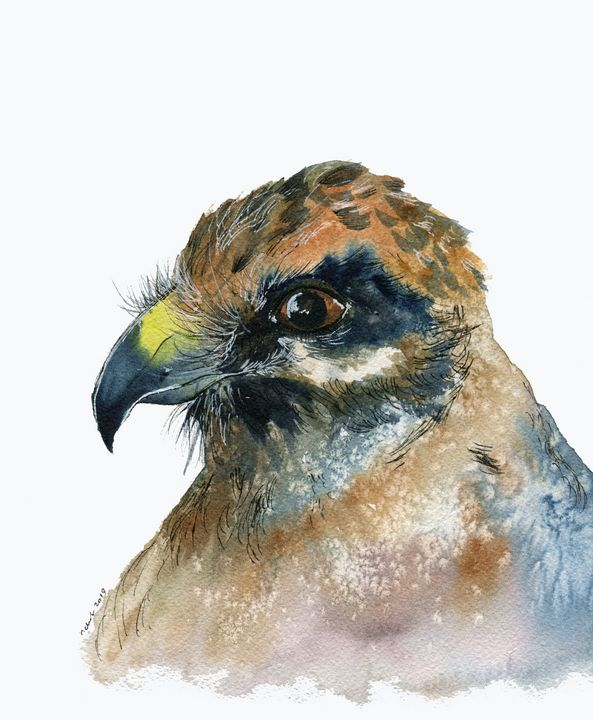 Birds Of Prey - Buzzard - Art Aroma by Mehak Mittal