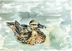 Sunny Ducky