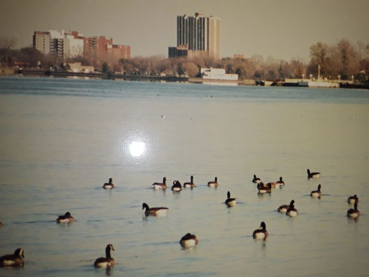 DETROIT'S GEESE CHILLING - BEYOND THE OUTER LIMITS EXQUISITE ART