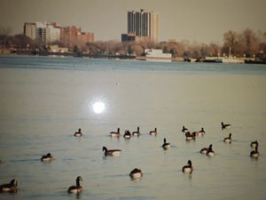 DETROIT'S GEESE CHILLING