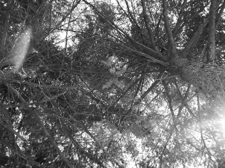 In the trees - KML Art