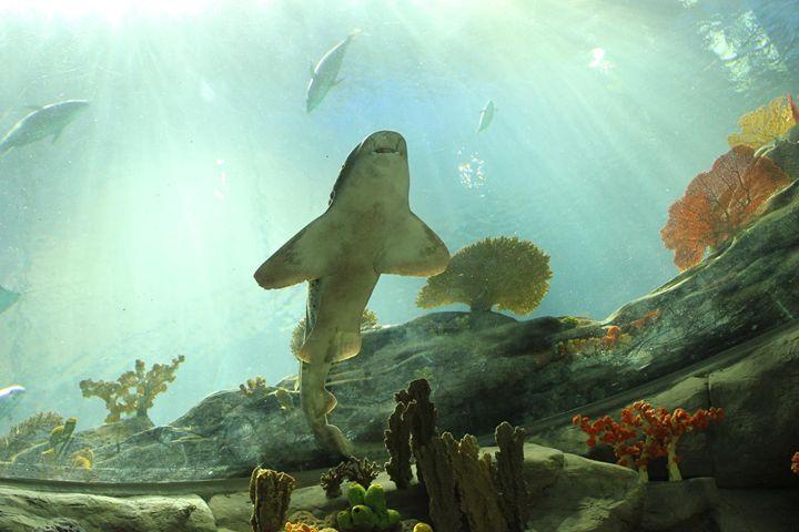 Under the Shark - Torri
