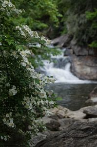 English Dogwood Falls