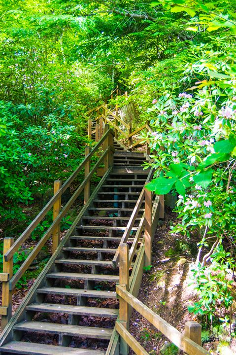 Stairs to Mother Nature - Hartshorn Studios