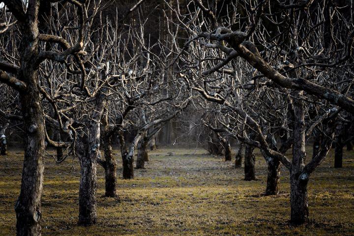 Dark garden - Vanilla Viking