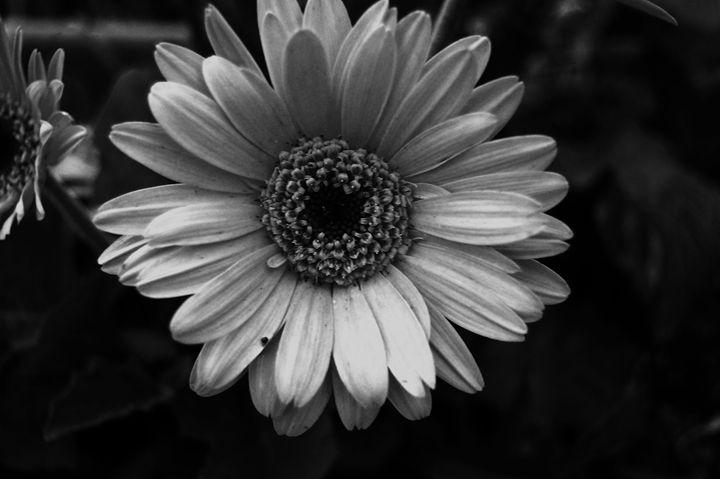 Simple Little Flower - Erin McCabe