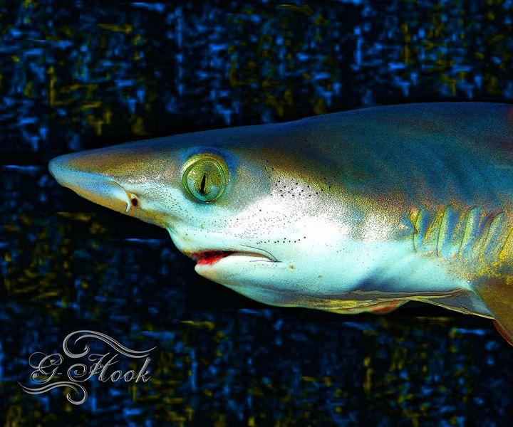16x20 Blacktip Shark - Digitaku Designs by G-Hook Images