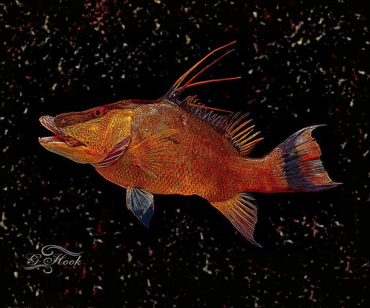 16x20 Hogfish - Digitaku Designs by G-Hook Images