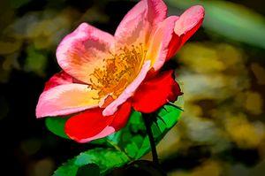 In Bloom Rubiginosa