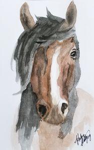 Wild Mustang Horse