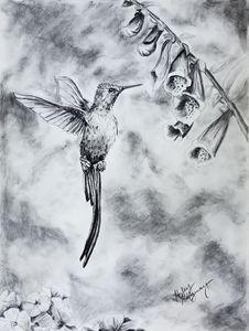 Freedom Takes Flight