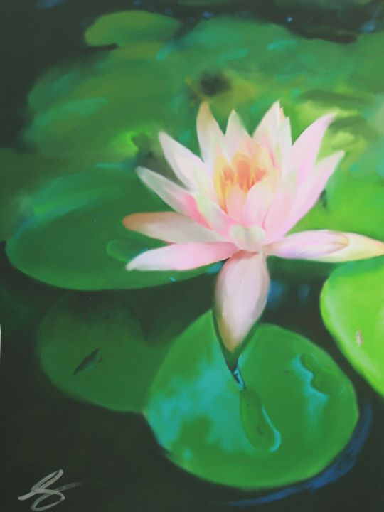 Untitled Lily - Amy Shaver