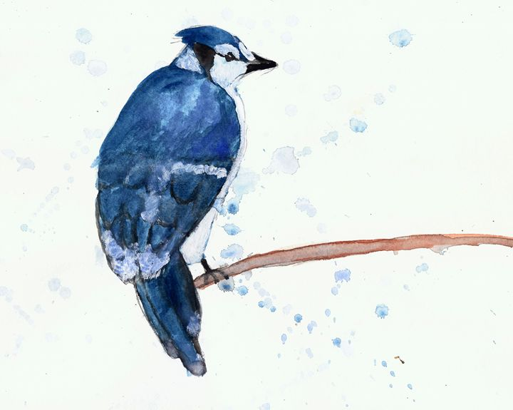 Bluejay - Sage Oelke's Artwork