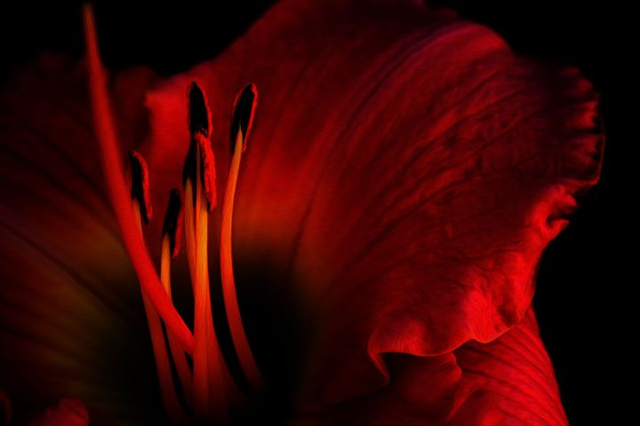 Flower - Sage Oelke's Artwork