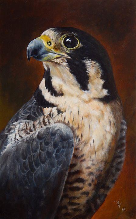 Peregrine Falcon - Vanderwyst