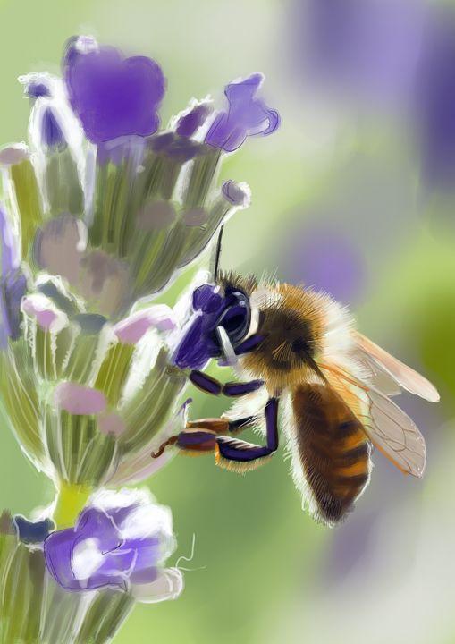 Bee - Vanderwyst