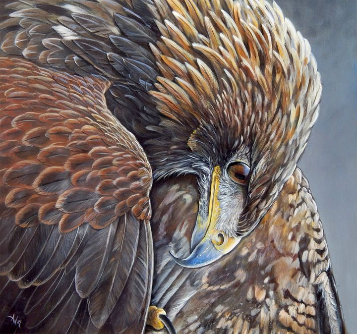 Golden Eagle - Vanderwyst